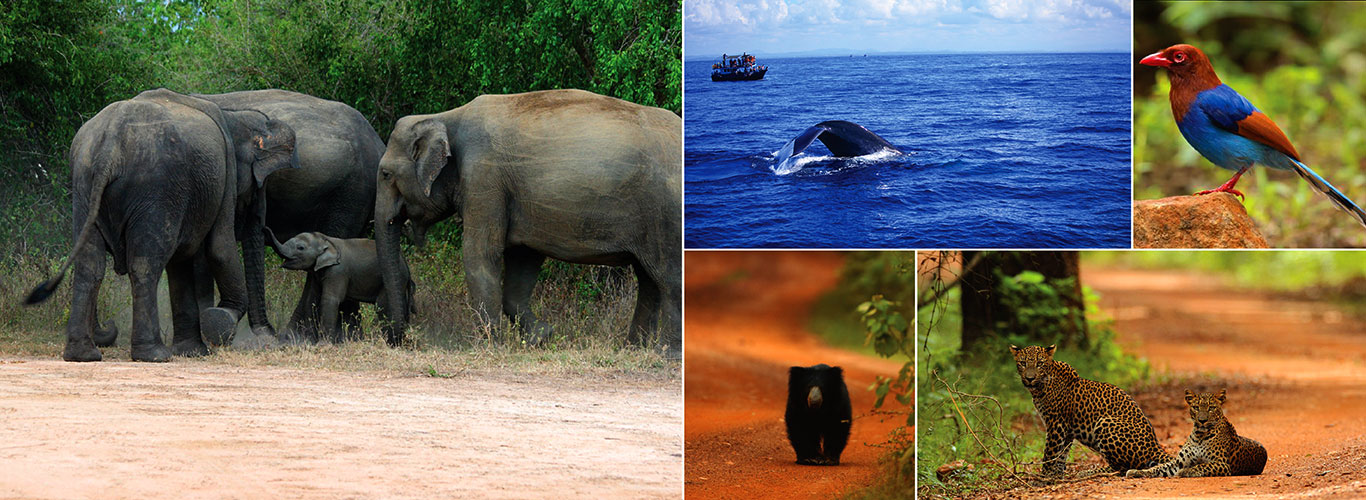 SriLankan Wildlife